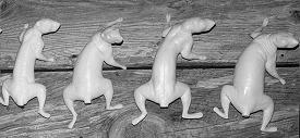 Taxidermy Form Grey Squirrel  Sitting Up 6 3//4 X 9 1//2 St Turn