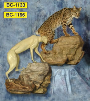 Small Animal Taxidermy Forms At Foster Supply